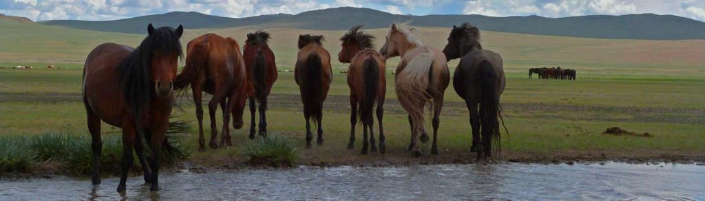 banniere chevaux eau