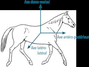 axes accélération cheval