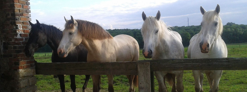 choisir-cheval
