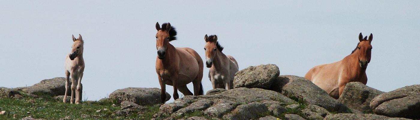 sciences équines famille chevaux