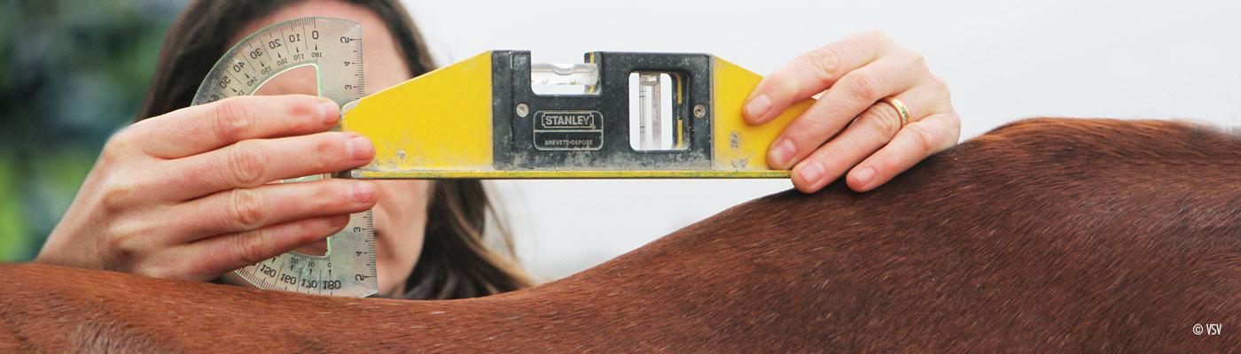 sciences équines mesures cheval