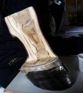 pied-vitrifie
