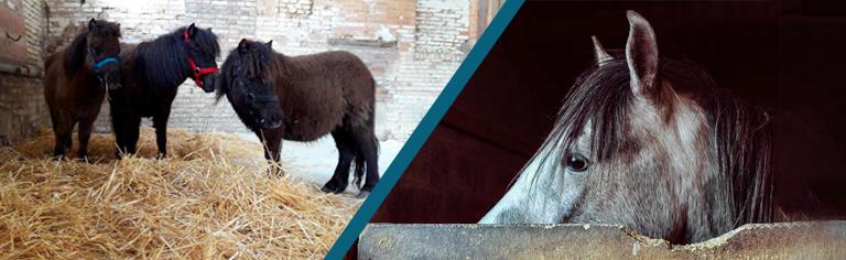 r u00e9sum u00e9  l u0026 39 h u00e9bergement en groupe a des effets positifs sur le comportement des jeunes chevaux au