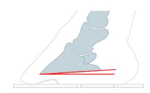 angle de la 3ème phalange avec le sol