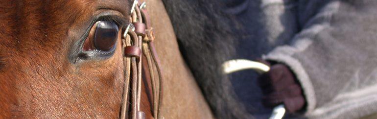cheval monté