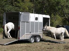 [Résumé] Effets de l'orientation pendant le transport sur le cheval – Padalino 2012
