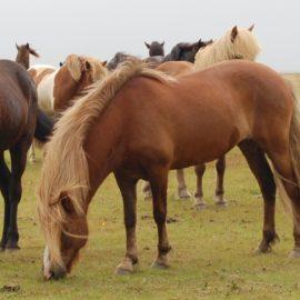 [Résultats d'enquête] Les déplacements des chevaux au parc