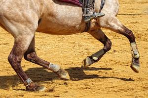 [Résumé] Un éthogramme pour repérer les boiteries chez le cheval monté – Dyson et al 2017