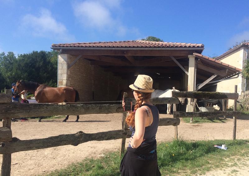 chevaux abri