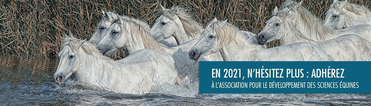 adhesion 2021