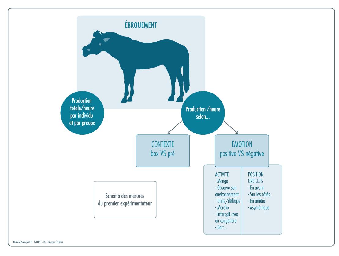 Figure 1: représentation graphique du recueil de données sur les ébrouements . En s'aidant d'un magnétophone, l'un des expérimentateurs recense la production d'ébrouement de chaque cheval. Il les répertorie aussi selon le contexte (box ou pré) et l'émotion immédiate perçue (positive ou négative). Cette dernière est évaluée selon deux indicateurs : l'activité et la position des oreilles.