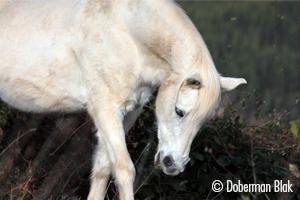[Résumé]Tendez l'oreille… votre cheval exprime son bien-être !- Stomp et al.,  2018