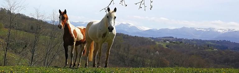 Bannière montrant un cheval curieux en premier plan et un autre un peu plus circonspect en arrière-plan