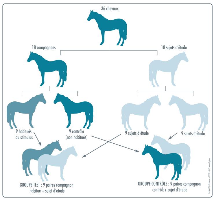 Illustration de la composition des paires de chevaux expliquées ci-dessus.