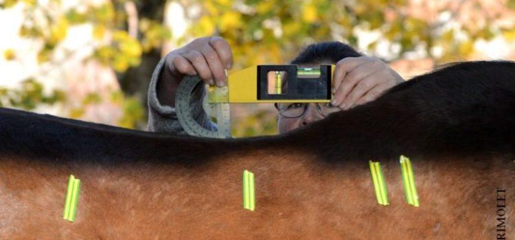 [Annonce] [WE assoc] Mesurer les caractéristiques du dos d'un cheval